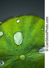 Raindrop - Close up of a raindrop on a waterlily leaf