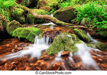 Stream gently cascading down a mountain forest, with small...