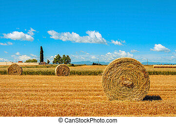 crop field in Spain with round straw bales after harvesting...