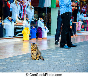 portrait of big funny cat near the turkish store