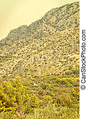 Olive Trees - Croatia - vingage version - Olive Trees in...