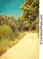 Road between olive trees in Croatia - vingage version -...