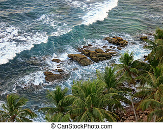 Palm trees at the ocean coast, top view. Sri-Lanka