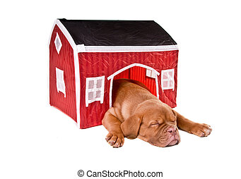Dog sleeping in a house - Dog sleeping in its small house