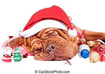 Santa, what\'s there in your bag for me?/ Sleeping dog with...
