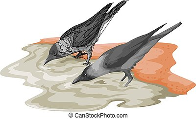 Vector of crow drinking water.