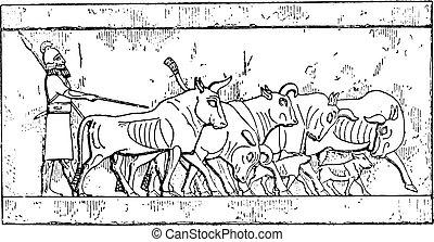 An Assyrian Cattle, vintage engraving. - An Assyrian Cattle,...