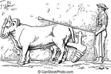 Etruscan plow, vintage engraving. - Etruscan plow, vintage...