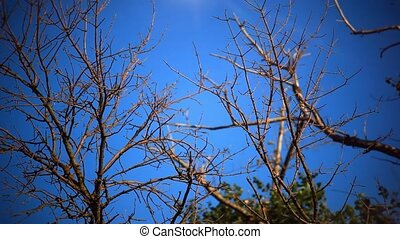 Dead dry branches of a tree in a field against the sky and...