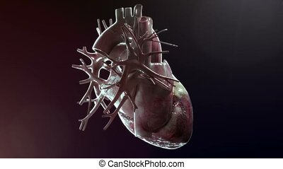 Human Heart rotation on black background - high quality 3d...