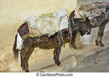 Morocco, Fes - Morocco, donkeys laden with indefinable goods