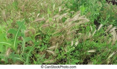 Cultivating of grass hay - In garden green Cultivating grass...