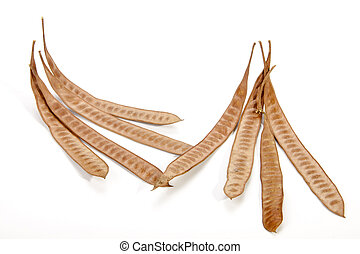 Eight Elongated Seed Pods Filled with Many Seeds