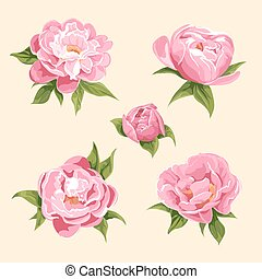 peonies - floral background of bright peonies