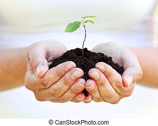 土壤, 很少, 植物, 藏品, 手