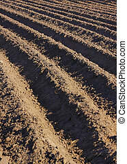 Ploughed field - Detail of a ploughed field with furrows
