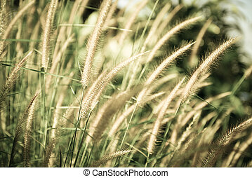 Vintage flower grass background - Vintage flower grass...