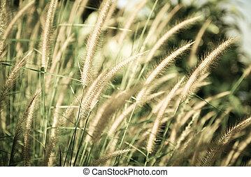 Vintage flower grass background - Vintage flower grass...