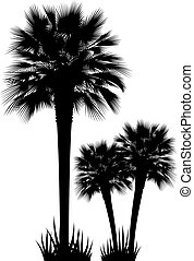 Palm Trees vector - Silhouettes of palm trees