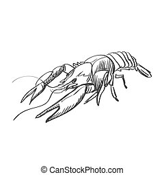 doodle lobster isolated on the white background, excellent...