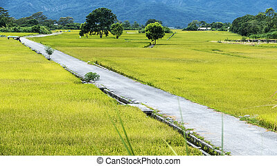 The beauty of the farmland in Taitung Taiwan for adv or...