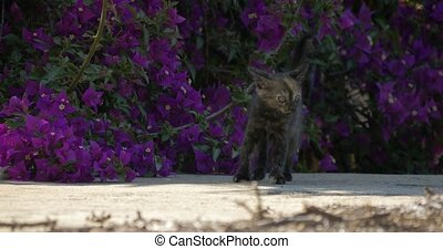 Beautiful playing kittens - Native Camera Output, 4K,...