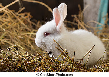 Rabbit on Dry Grass