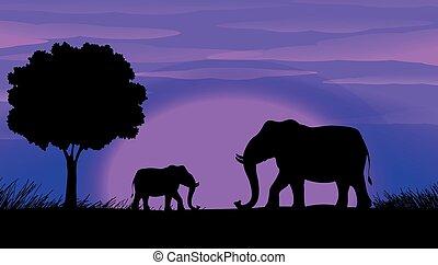 Silhouette Elephants - Sihouette elephants in the field