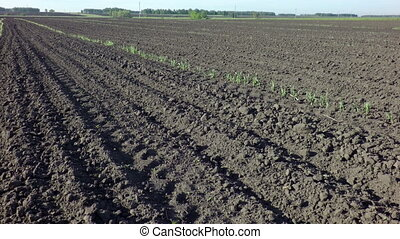 Plowed field ready for sowing Omsk region Russia