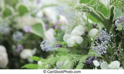 Decoration of flowers - Translation of focus from one flower...