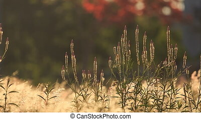 small girl walks through meadow grass shaked by wind - small...