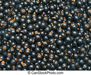 Blackcurrant - Background from blackcurrant