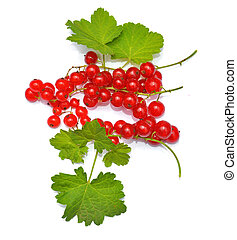 Redcurrant with leaves