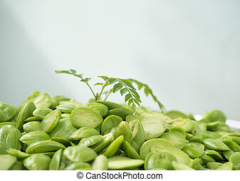 fragrant sprout grow from sato smelly seed - sprout of...