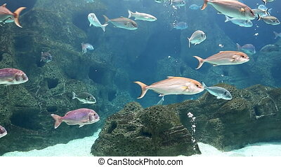 Fish swimming slow in big aquarium - View of huge aquarium...