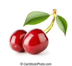 dos, brillante, maduro, cerezas, con, hojas,