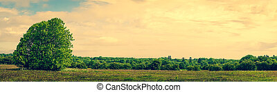 Panorama landscape with a tree