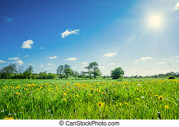 Countryside field with dandelions - Colorful landscape with...