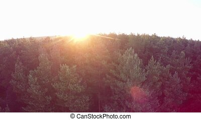Sunrise over the forest - Flight above the green coniferous...