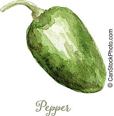 Watercolor sweet pepper- hand painted vector illustration