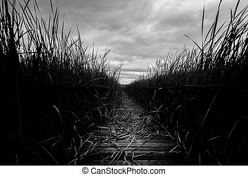 Wooden path trough the reed outdoors at summer