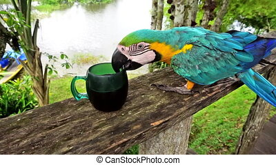 Macaw Looking for Coffee