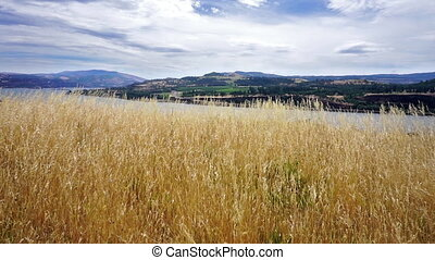 Dry Grass Landscape - Landscape of dry grass blowing in the...