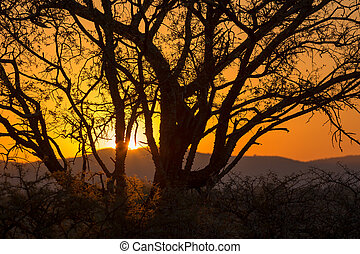 African sunrise - Beautiful African landscape at sunrise...