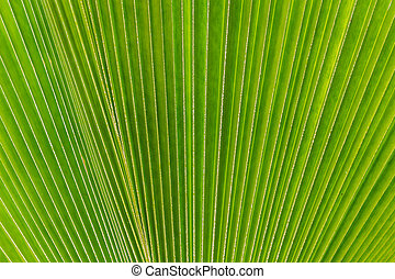 Abstract image of green palm tree leaf as a background
