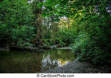 West Coast Rain Forest - Typical rain forest landscape with...