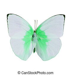 fancy butterfly isolated on white - Pink and green...