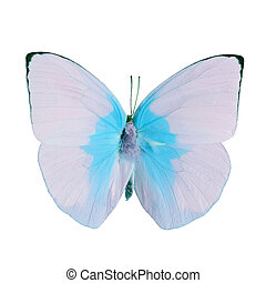 fancy butterfly isolated on white - Pink and blue butterfly,...