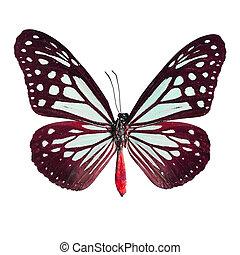 imaginación, mariposa, aislado, en, blanco,