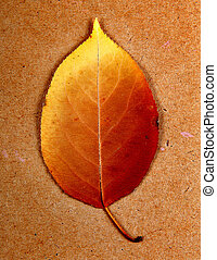 Autumnal Leaf On the Wooden Board Background